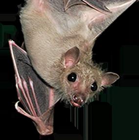 bat_211